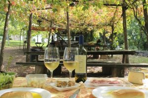 Frascati Wine Tour and Pizza Tour