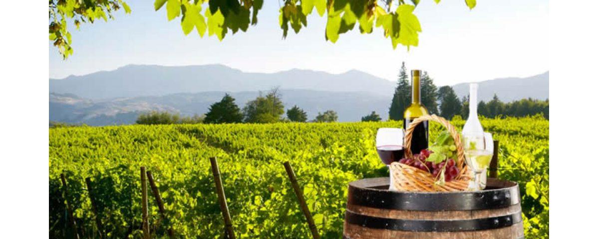 castelli romani - Frascati wine tasting 1200x480 - Frascati Traditional Wine Tour