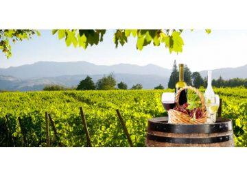 castelli romani - Frascati wine tasting 360x260 - Frascati Traditional Wine Tour